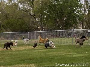 hondenspeelplek