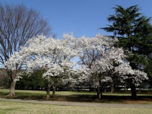 magnoliakobusweb