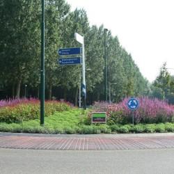 Rotonde in bloei